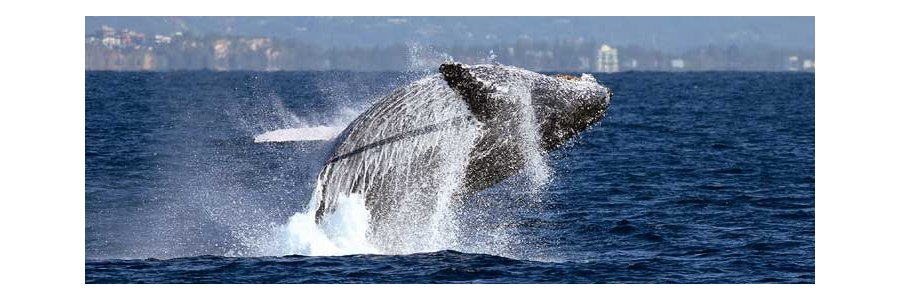 Coolangatta Whale Watching And Accommodation Package